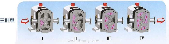 rp系列三叶型转子泵结构图